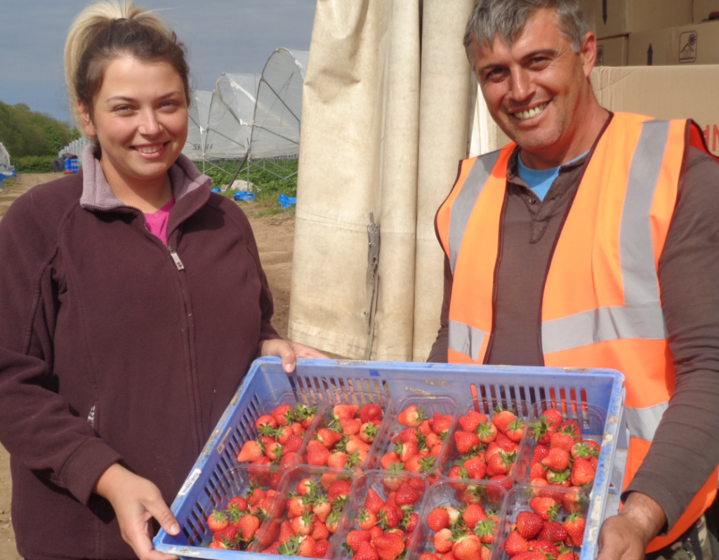 The start of new season strawberries at Place UK