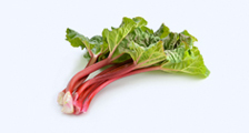 Fresh Forced Rhubarb
